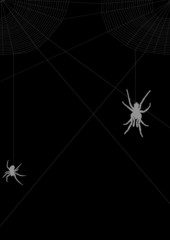 two gray spiders in web illustration