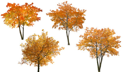 set of four bright autumn trees isoalted on white