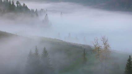 Fog on the Mountain Pasture