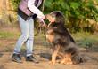 Newfoundland dog with owner