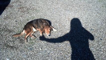 Caro cucciolo il tuo angelo custode si prenderà cura di te