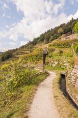 Algund, Algunder Waalweg, Vinschgau, Herbst, Weinberg, Italien