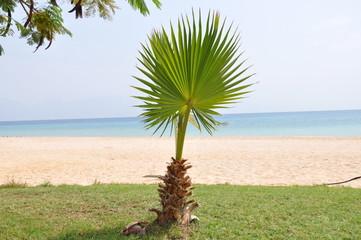 Пальма на фоне песчаного пляжа и моря