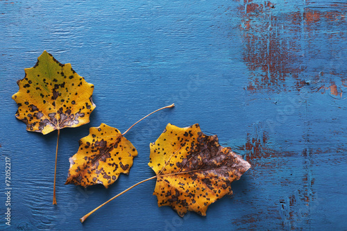 Yellow leaves on blue wooden background - 72052217