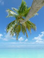 Palmtree in the Maldives