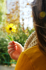 Beautiful autumn flower in hand, outdoors