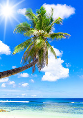 Vacation in a Dream Tropical Sea