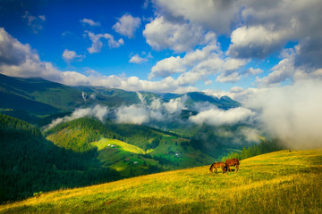 Amazing mountain landscape with fog and horses