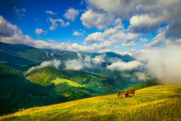 Amazing mountain landscape with fog and horses