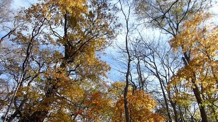 秋の風に揺れる紅葉_26