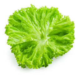 Salad. Lettuce isolated on white background