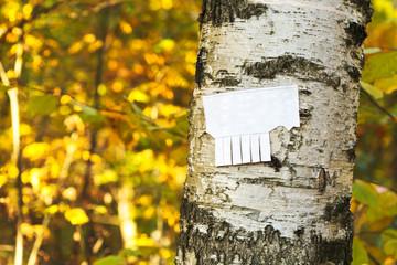 tear-off paper notice on birch trunk
