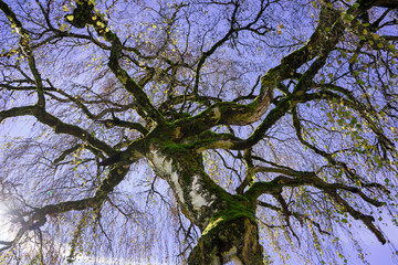 Geäst eines Baumes