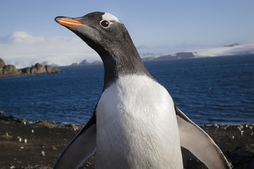 Pinguin, Antarktis