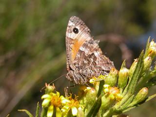 farfallina d'autunno 5