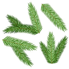 Set vector Christmas tree branch for decorate