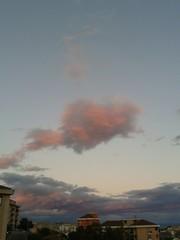 Calamaro rosa in volo