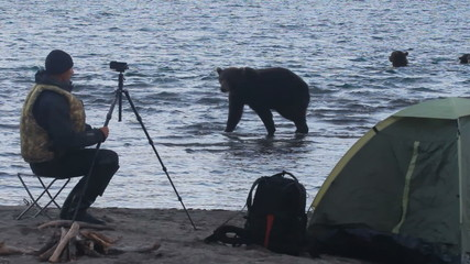 Bear near the tent.