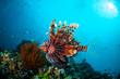 Leinwandbild Motiv Lionfish swim in Gili Lombok Nusa Tenggara Barat underwater