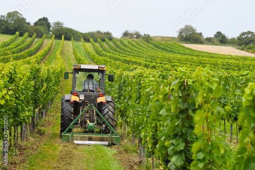 canvas print picture Weinbauer arbeitet mit Traktor im Weingarten