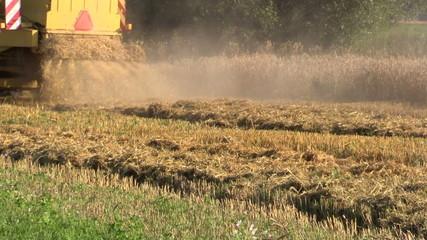 back view farm yellow harvester combine working in grain field
