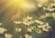 Butterfly on flower - 72073655