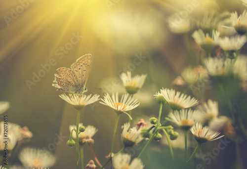Foto op Plexiglas Lente Butterfly on flower