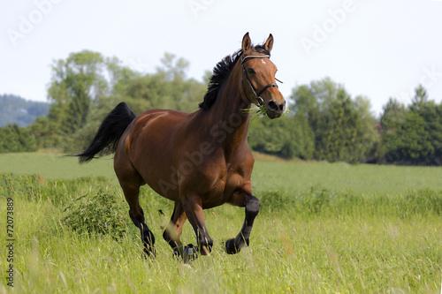 Keuken foto achterwand Paarden Mila