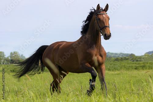 In de dag Paarden Mila