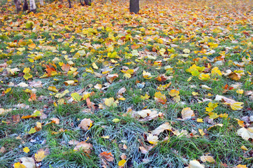 Abstract background. First autumn slight frosts.
