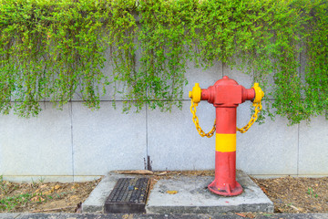 Green plant on the wall with red hydrant