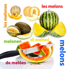 Photos of different varieties of melons and the translations