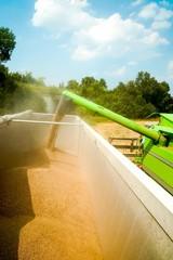 Mähdrescher beim Getreideentladen auf Getreideanhänger