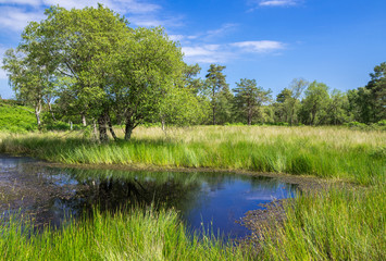 Pond at Arne in the Dorset Countryside, United Kingdom