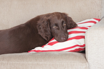 puppy resting on a pillow