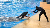 New Orca Ocean exhibit, Tenerife