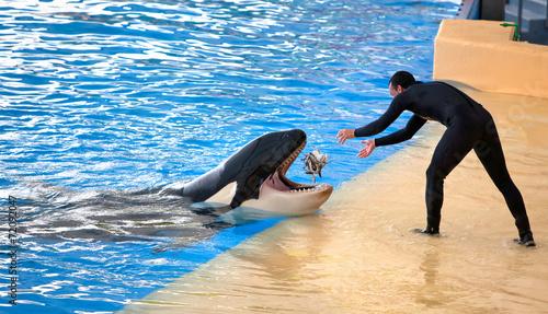 Keuken foto achterwand Dolfijn New Orca Ocean exhibit, Tenerife