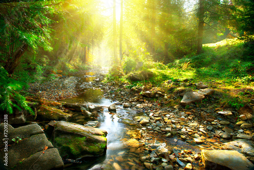 Poster Bossen Mountain river. Tranquil scenery in the middle of green forest