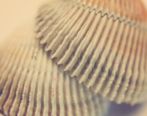 seashell texture, close-up with selective focus and toning Retro
