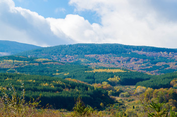 Pictorial landscape photo of a forest at autumn