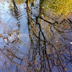 Baum spiegelt sich im Wasser
