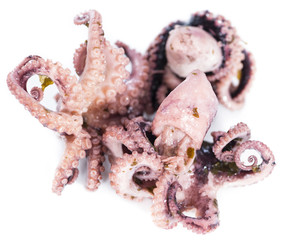 Small Octopus (isolated)