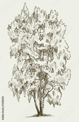 Panel Szklany birch tree