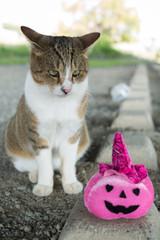 猫とカボチャ