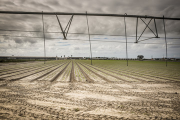 farmland with an automatic irrigation system