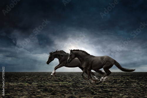 Fotobehang Paarden Two black horses