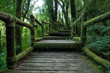 Passage in the primeval forest in Doi inthanon Chiang Mai Thaila