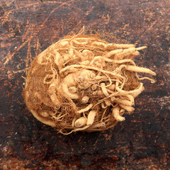 Celeriac on brown rustic background