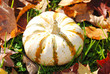 White Pumkin with Stripes on Fall Grass