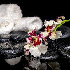 spa concept of orchid Cambria flower with drops and white towels